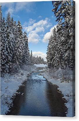 Winter Creek Canvas Print by Fran Riley