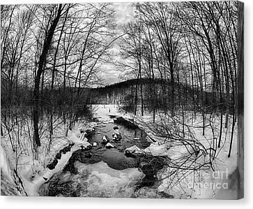 Winter Creek Canvas Print by Mark Miller