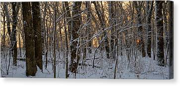 Winter Dawn Canvas Print by Bruce Morrison