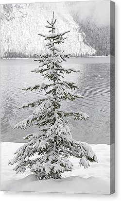 Winter Decor Canvas Print by Diane Bohna