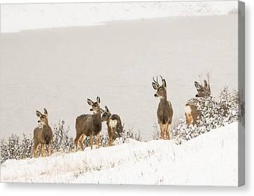Winter Deer Canvas Print by Brittany Schwartz