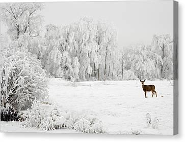 Winter Doe Canvas Print by Mary Jo Allen