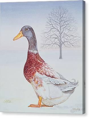 Winter Drake Canvas Print by Ditz