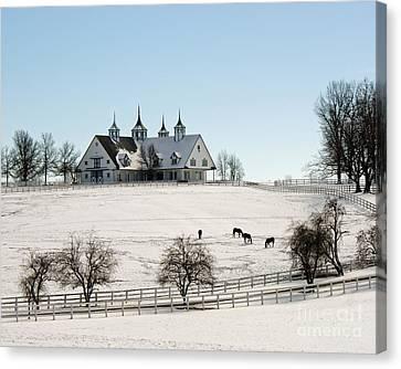Kentucky Horse Park Canvas Print - Winter Dream by Roger Potts