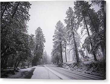 Winter Driven Canvas Print by Anthony Citro