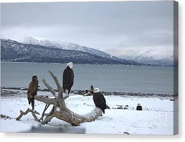 Winter Eagles Canvas Print