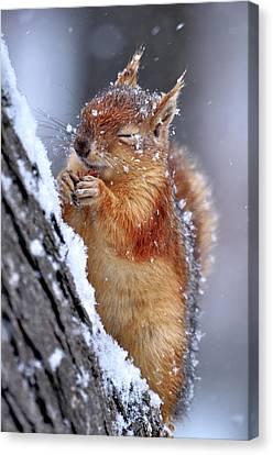 Winter Canvas Print by Ervin Kobak?i