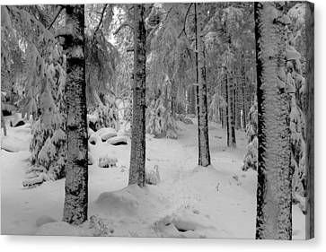 Winter Fairy Tale Forest Canvas Print by Andreas Levi