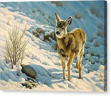 Mule Deer Canvas Print - Winter Fawn - Mule Deer by Paul Krapf