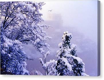 Winter Flight Of Raven Canvas Print