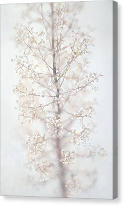 Canvas Print featuring the photograph Winter Flower by Suzanne Powers