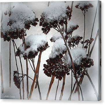 Winter Flowers Canvas Print by Mikki Cucuzzo