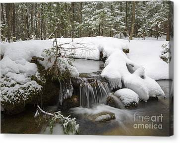 Winter Forest - Lincoln New Hampshire Usa Canvas Print by Erin Paul Donovan