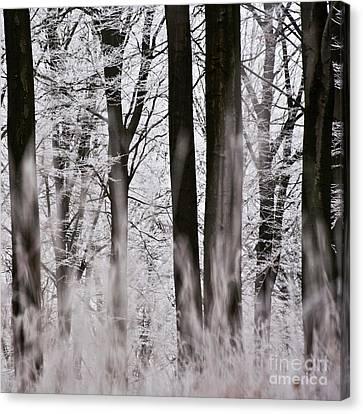 Winter Forest 1 Canvas Print by Heiko Koehrer-Wagner