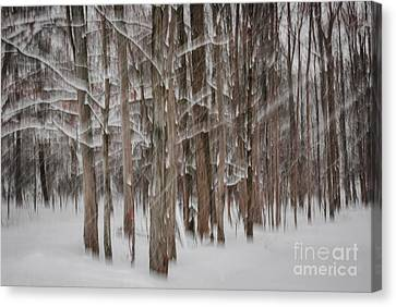 Winter Forest Abstract II Canvas Print
