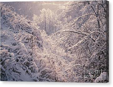Winter Forest After Ice Storm Canvas Print by Elena Elisseeva