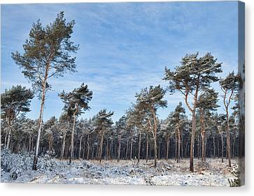 Winter Forest Covered With Snow Canvas Print by Dirk Ercken