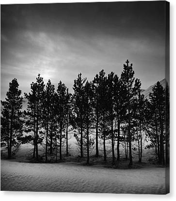 Canvas Print featuring the photograph Winter Forest by Frodi Brinks