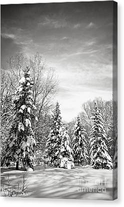 Winter Forest In Black And White Canvas Print by Elena Elisseeva