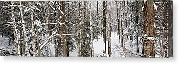 Winter Forest Landscape Panorama Canvas Print by Elena Elisseeva