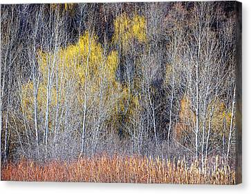 Winter Forest Landscape With Bare Trees Canvas Print
