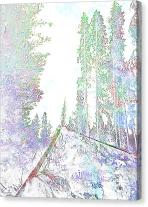 Winter Forest Scene Canvas Print by John Fish