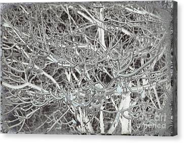 Winter Freeze Canvas Print by Arlene Carmel