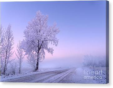 Winter Frost Canvas Print by Dan Jurak