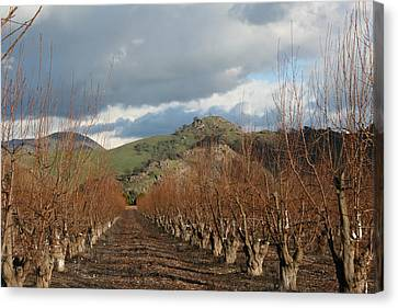 Canvas Print - Winter Fruit Orchard by Marsha Ingrao