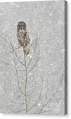 Winter Ghost Canvas Print by Dee Cresswell