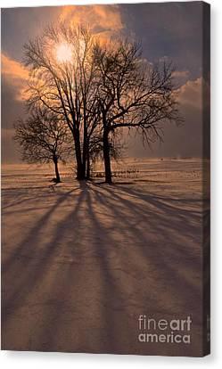 Winter Glory Canvas Print by Tim Good