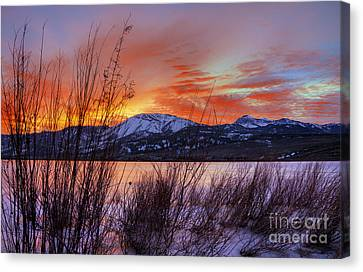 Winter Glow Canvas Print by Dianne Phelps