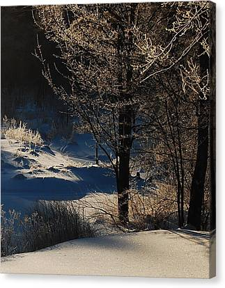 Winter Glow Canvas Print by Mim White