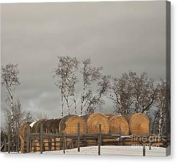 Winter Gold Canvas Print by Sandi Mikuse