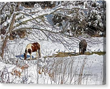 Winter Graze Canvas Print by Denise Romano