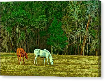 Winter Grazing In North Florida Canvas Print