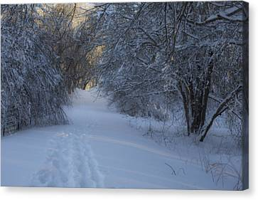 Winter Hike Canvas Print by Andrew Pacheco