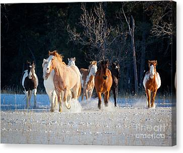 Winter Horses Canvas Print by Inge Johnsson
