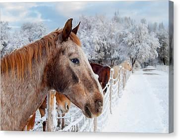 Winter Horses Canvas Print