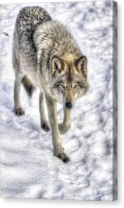 Winter Hunter Canvas Print