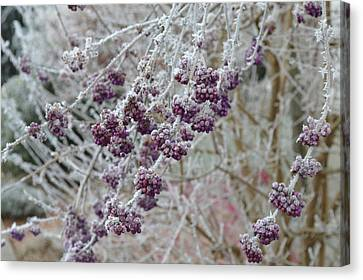 Canvas Print featuring the photograph Winter In Lila by Felicia Tica