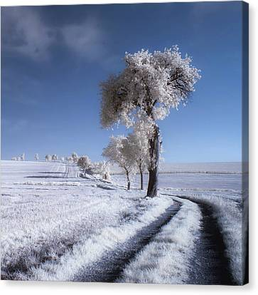 Winter In Summer Canvas Print by Piotr Krol (bax)
