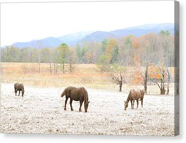 Winter In The Cove Canvas Print by Gene Smith