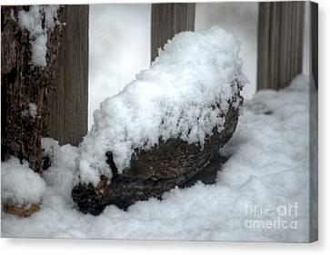 Winter In The Heartland 4 Canvas Print by Deborah Smolinske
