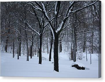 Canvas Print featuring the photograph Winter In The Park by Dora Sofia Caputo Photographic Art and Design