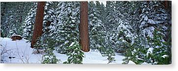 Winter In The Sierra Mountains Canvas Print by Panoramic Images