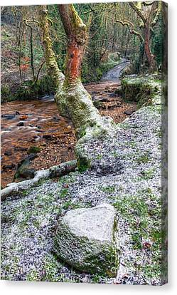 Winter In The Woods Canvas Print by Adrian Evans