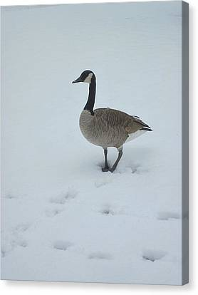 Winter In Their Cry Canvas Print by Guy Ricketts
