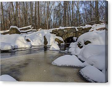 Winter In Weetamoo Woods Canvas Print by Andrew Pacheco