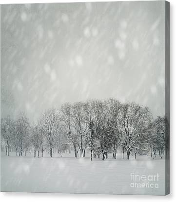 Winter Canvas Print by Jelena Jovanovic